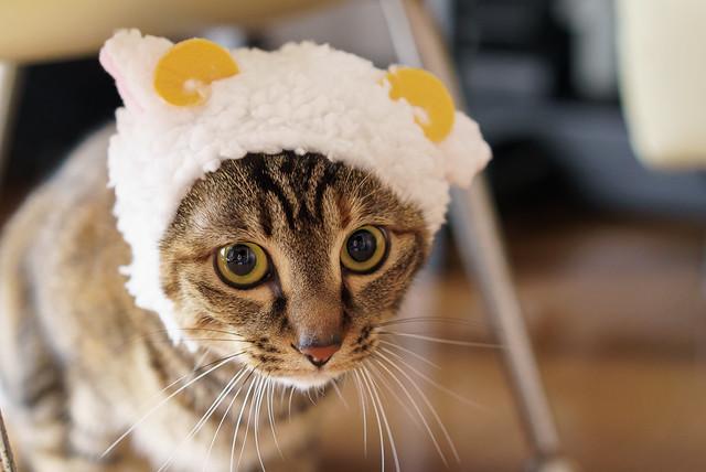かわいい かわいい ねこひつじちゃん cat hat 猫帽子