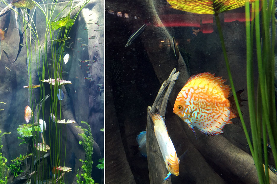 101615_aquarium17