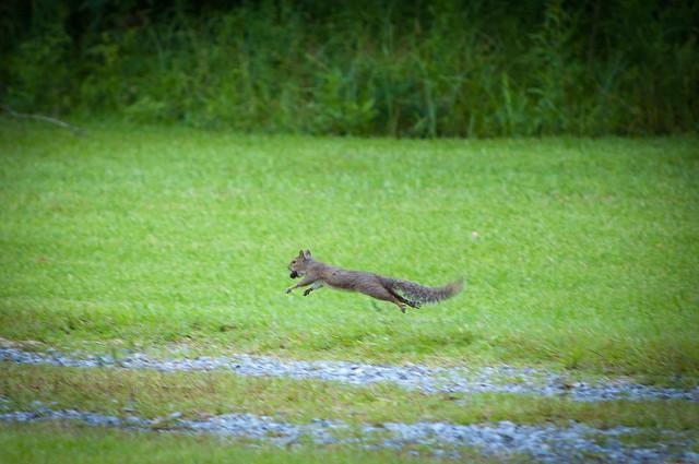 Wheeee! Got a nut got a nut!