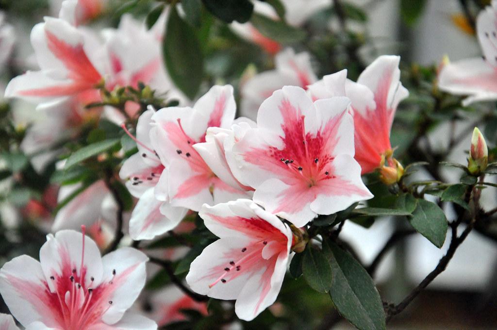 Ботанический сад DSC_0231