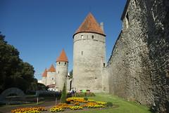 Башня Кёйсмяэ. Köismäe torn. Tallin