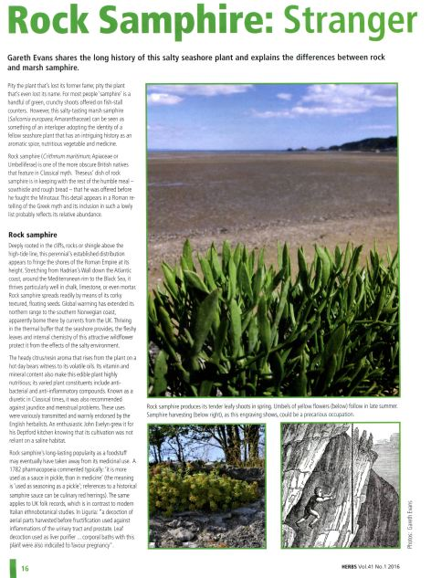 "Article, ""Rock Samphire"";  Journal of the Herb Society."