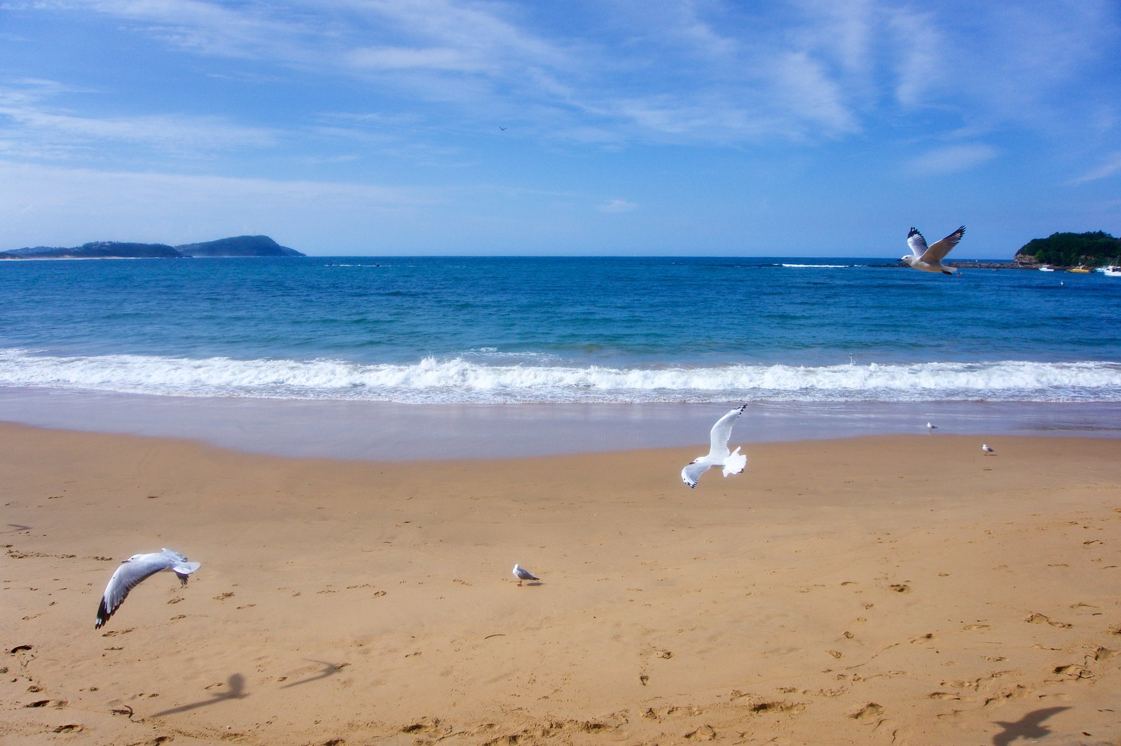 Flying birds at Terrigal Beach