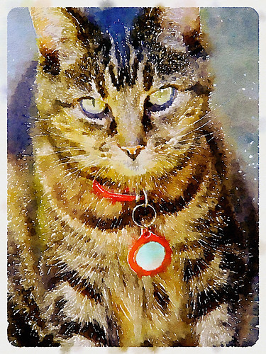 Pearly Cat in Waterlogue