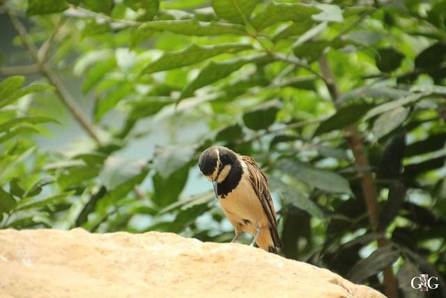 Sonntags-Besuch Zoo Berlin 03.07.20169
