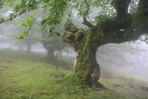 Parque Natural de #Gorbeia #Orozko #DePaseoConLarri #Flickr - -633