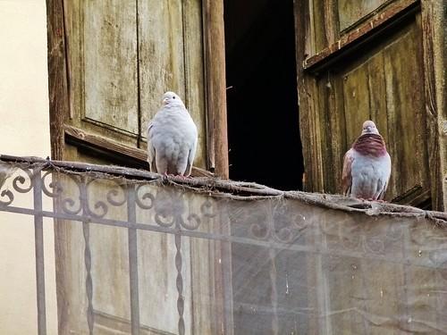Palomas en el balc n de un edificio ecl ctico del barrio for Ahuyentar palomas del balcon