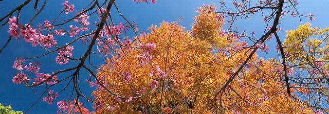 在寒冬尋找初春裡的花