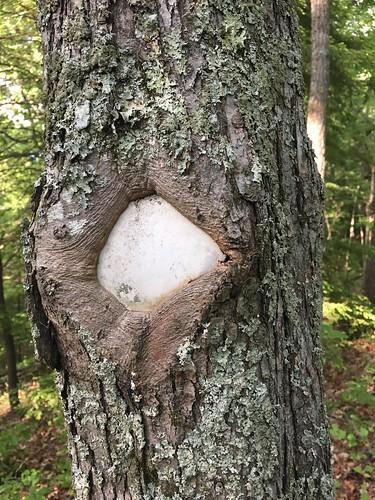 Tree consuming blaze