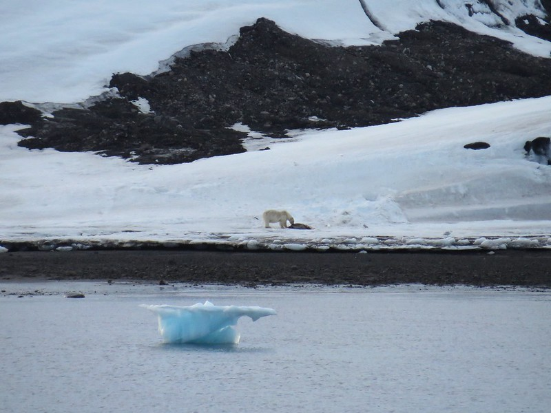 The Day I Saw a Polar Bear