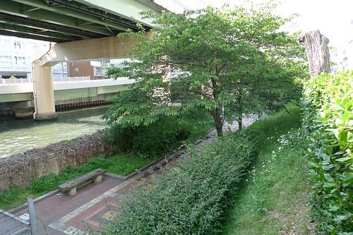 東横堀川 川舞台