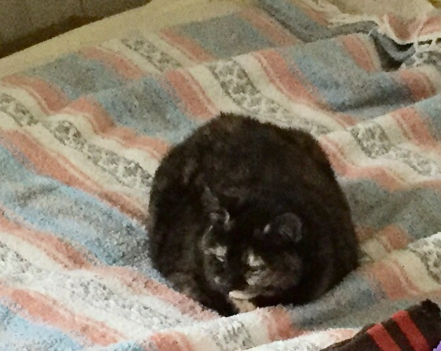 Kitty loaf