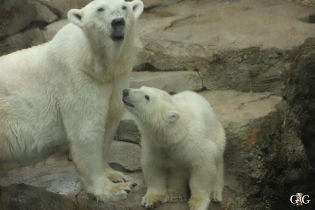 Besuch Zoo am Meer 25.06.201650