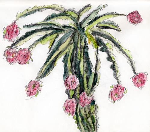 Sketch of a Dragon Fruit Tree