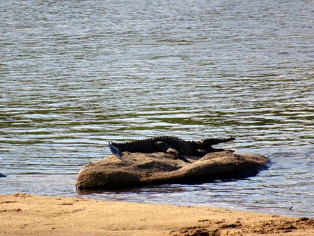 Lion Sands Safari Day 3- Crocodile
