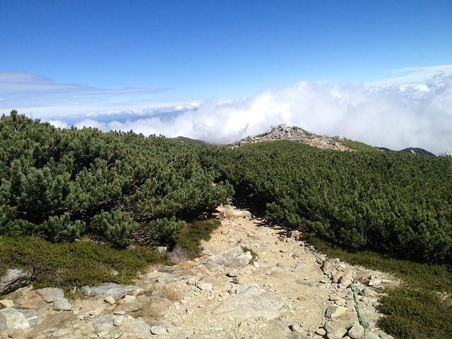 木曽駒ヶ岳 馬の背 ハイマツ帯