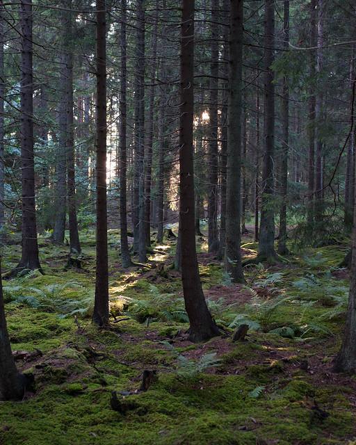 Stensund