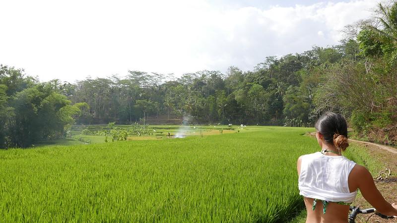 27516687413 a30f242247 c - REVIEW - Mesastila Resort, Central Java (Arum Villa)
