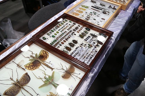 Moscow International Insect Fair - 2016