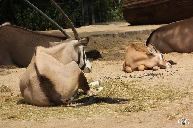 Sonntags-Besuch Zoo Berlin 19.06.201647