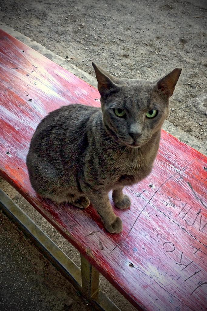 Suspicious Greek Cat