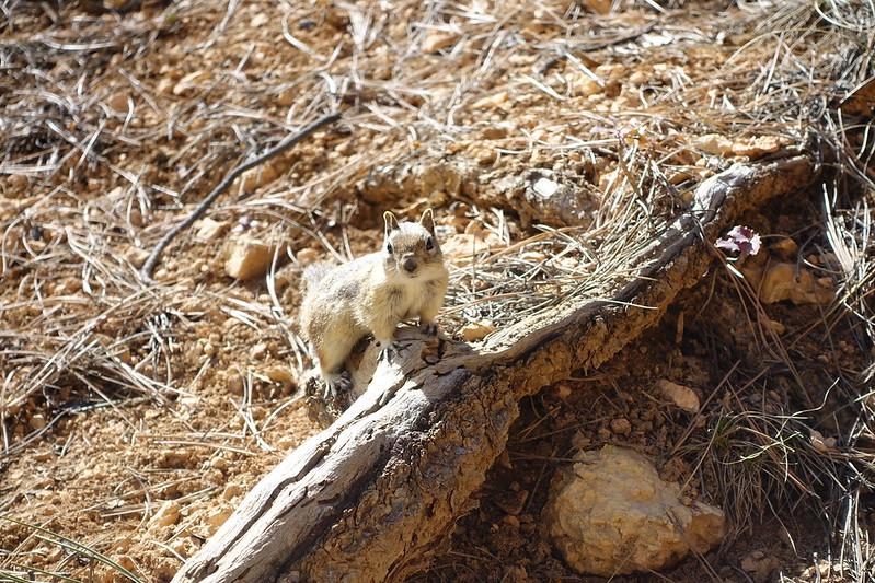 Bryce Canyon-00369