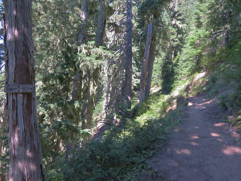 Pacific Crest Trail junction with the southern end of the Paradise Park Loop Trail