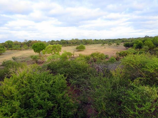 Lion Sands Safari Day 3- Chalkley Treehouse-001