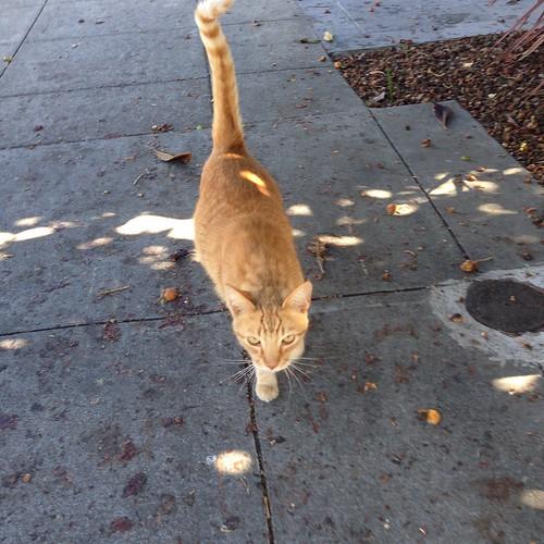 Fulton Street Cat..