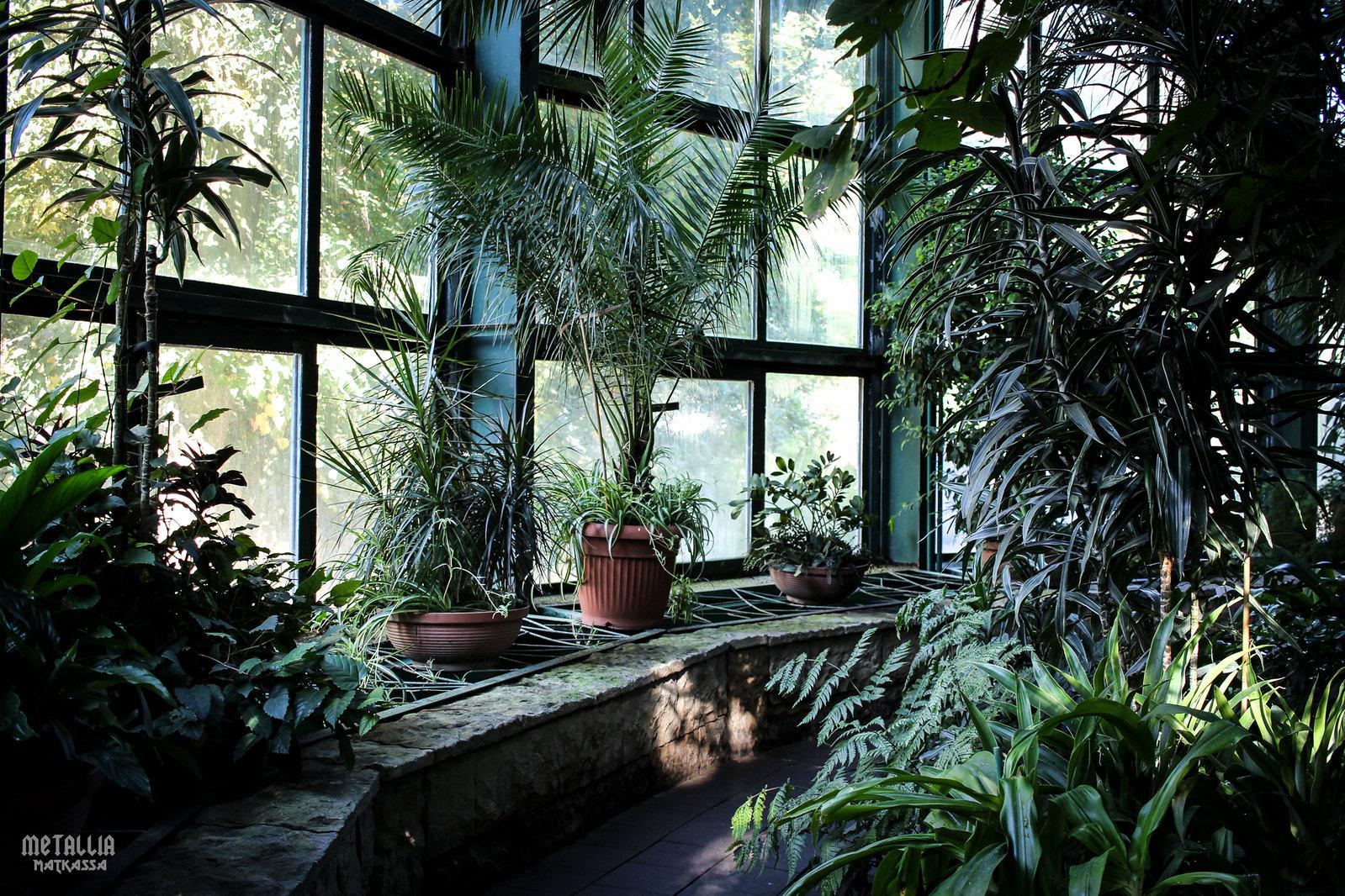 park oliwa, gdansk oliwa, gdanskin nähtävyydet, sightseeing in gdansk, oliwa greenhouse, botanical garden in gdansk