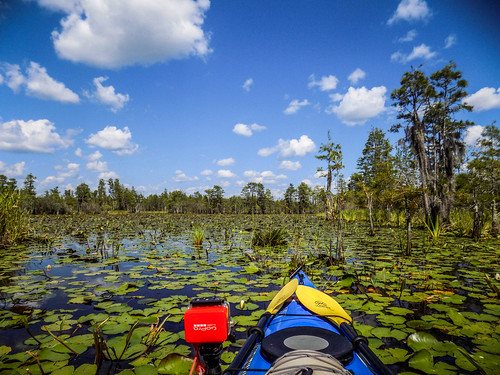 Lowcountry Unfiltered at Okefenokee-278