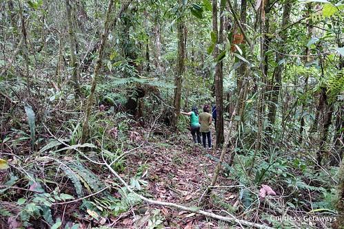 maputi-trail-bukidnon.jpg