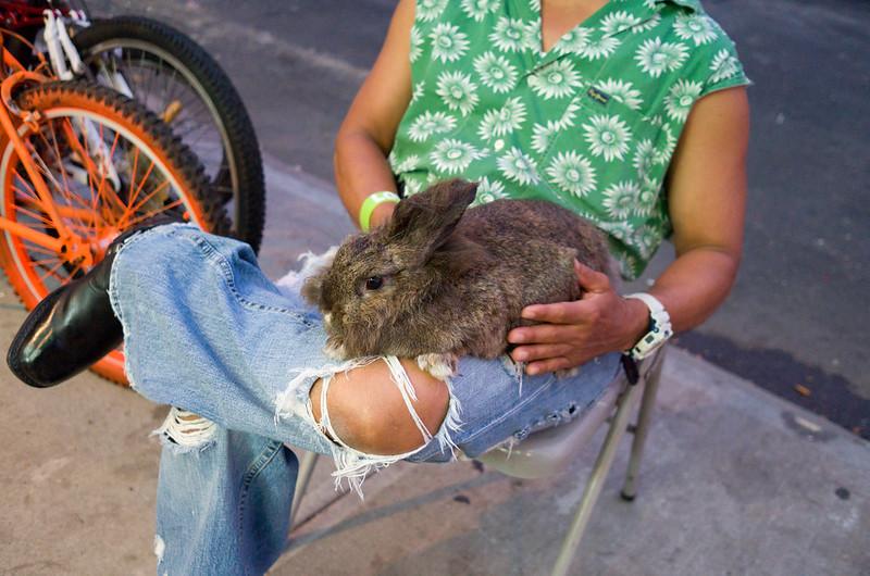 Bunny on McDonald Avenue