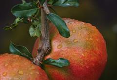 Pomegranate - Takumar Sonnar 58/2 @f5.6