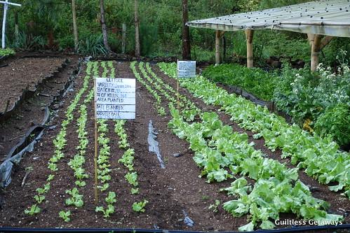 organic-farm-bukidnon.jpg