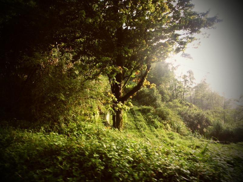 Taiwan Island trips。Couchsurfing。環島景點。南投秘境。忘憂森林。17度C隨拍。  (16)