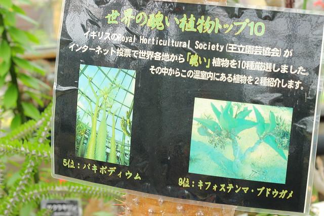 世界の醜い植物パウチ
