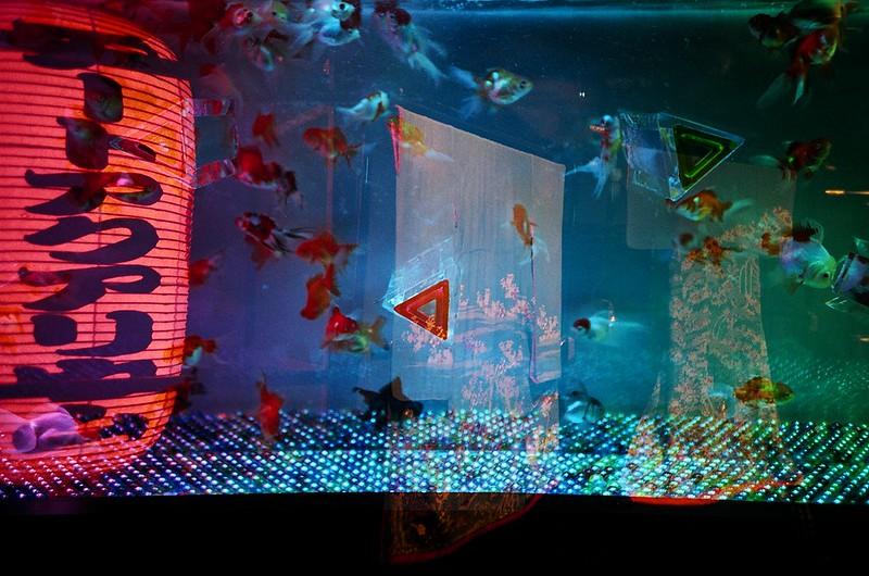 アートアクアリウム展~博多・金魚の祭り~(多重露光)