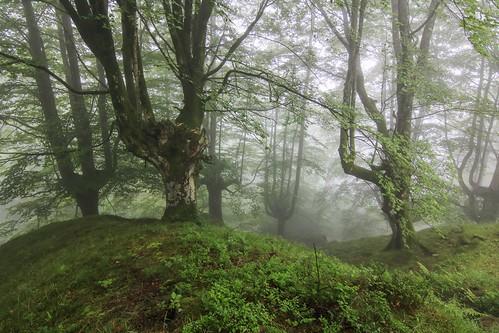 Parque Natural de #Gorbeia #Orozko #DePaseoConLarri #Flickr - -607