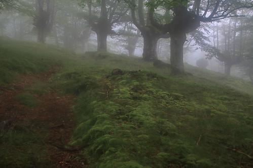 Parque Natural de #Gorbeia #Orozko #DePaseoConLarri #Flickr - -497
