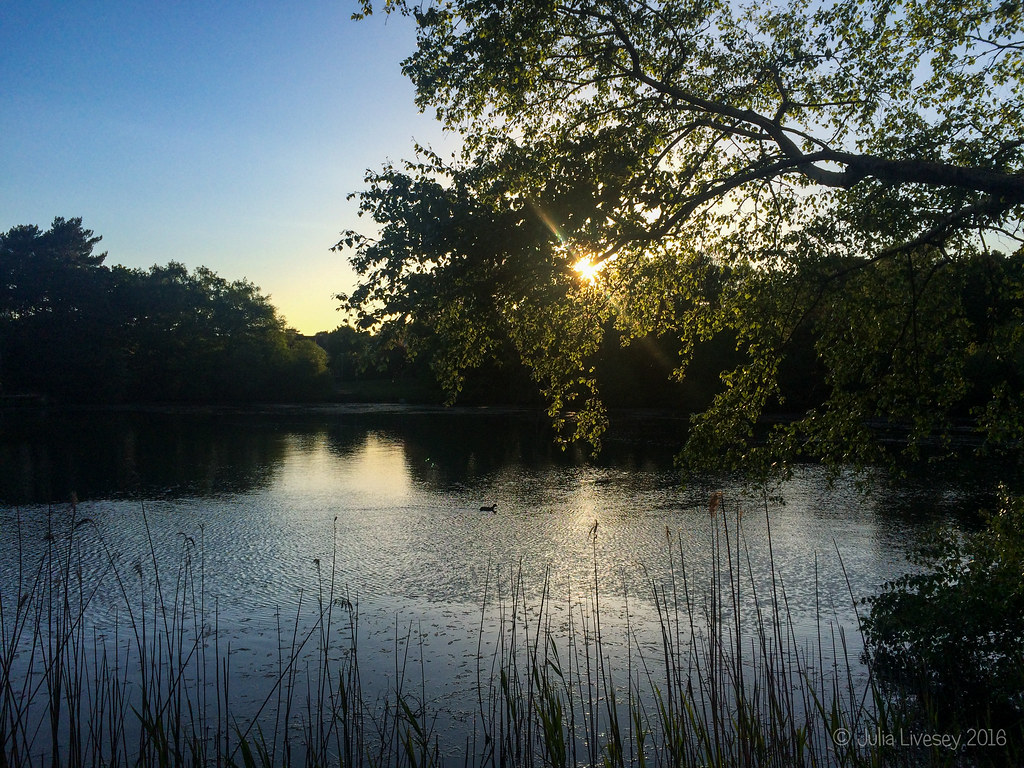 The sun sets over Creekmoor Ponds