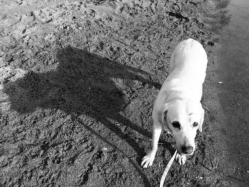 Original: Daisy and her shadow