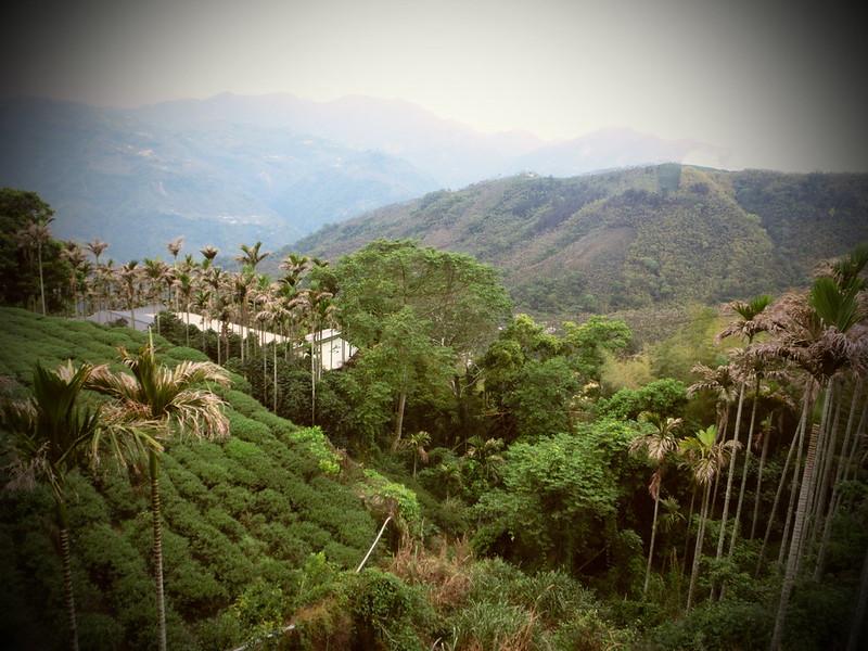 Taiwan Island trips X Couchsurfing。嘉151鄉道隨拍。太平36灣 (29)