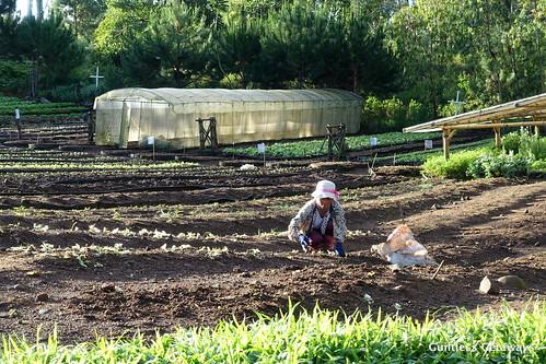 dahilayan-farm.jpg