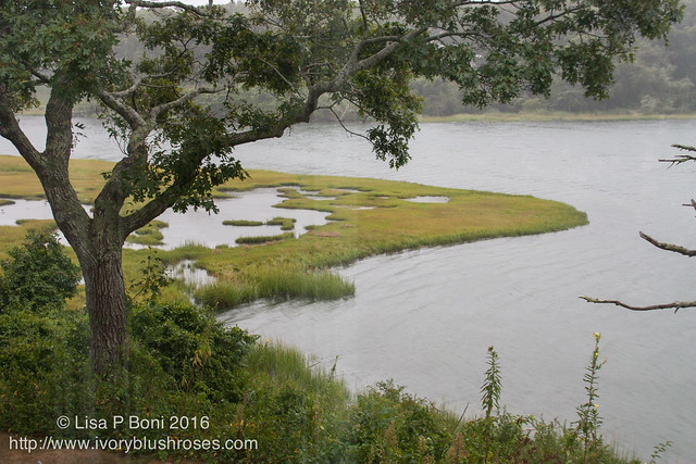 Hermine rain and high tide on Bumps River Marsh
