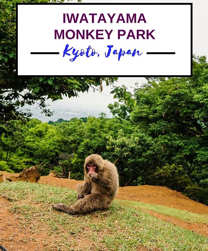 ARASHIYAMA BAMBOO FOREST AND IWATAYAMA MONKEY PARK – WANDERLUSTYLE