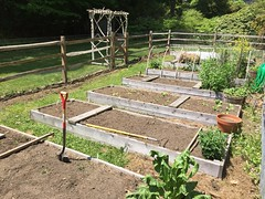 may garden IMG_6264