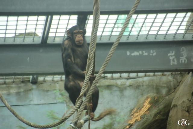 Besuch Zoo am Meer 25.06.201624