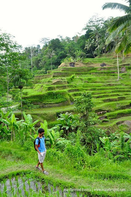 Exploring the Rice Terraces in Ubud Bali