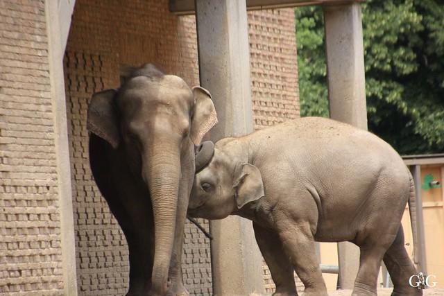 Sonntags-Besuch Zoo Berlin 03.07.201644